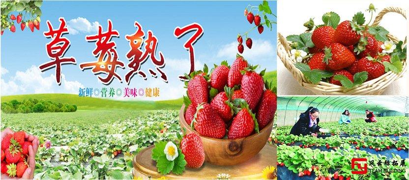 北京郊区周边草莓采摘团建活动一日游